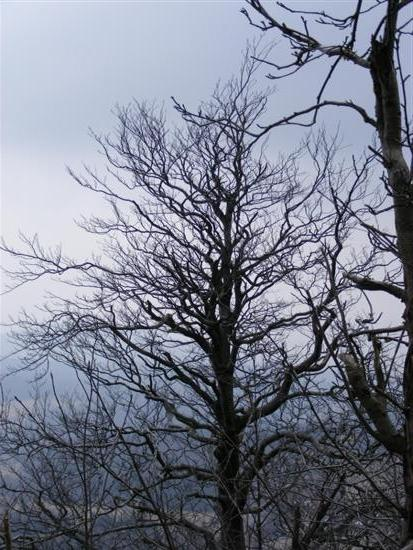 hochwald12.jpg